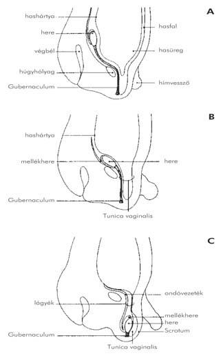 A prosztata adenoma tünetei és diagnosztizálása