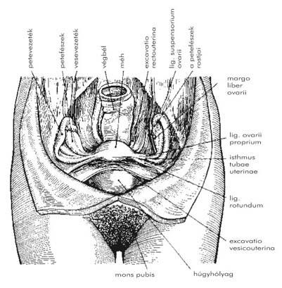 A szexuális élet a prosztatitis műtét után